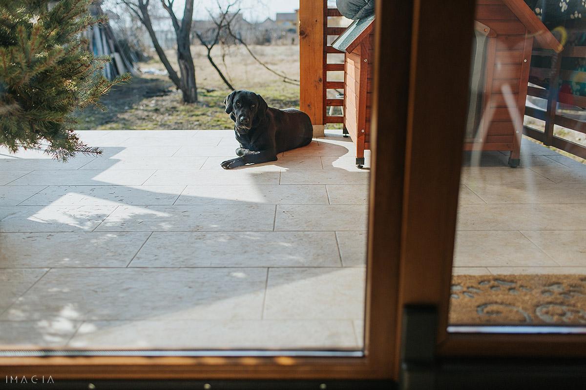 Câine pe terasa casei